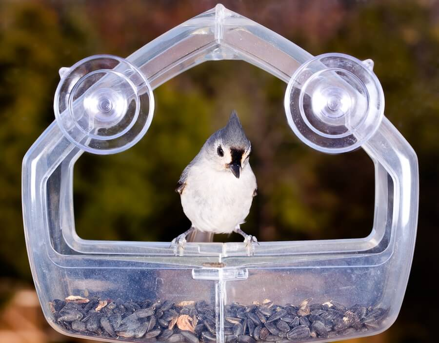 Bird feeder on window