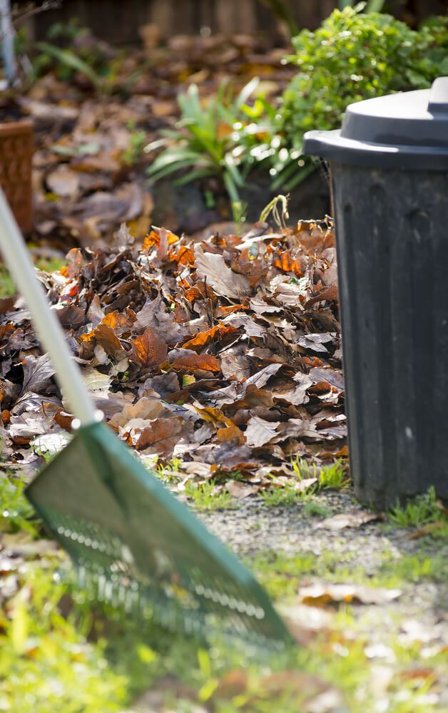 leaves-being-raked