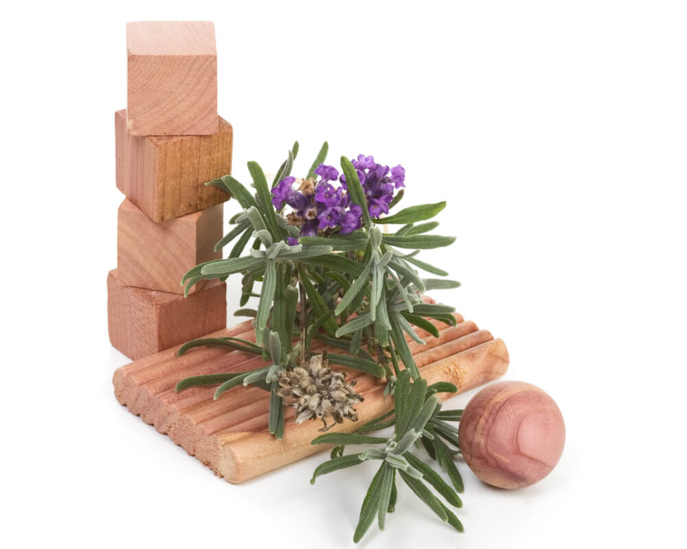 Cedar Blocks - moth protection