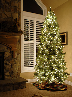 christmas tree infront of window shutters